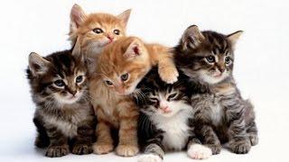 El lado salvaje de los gatos