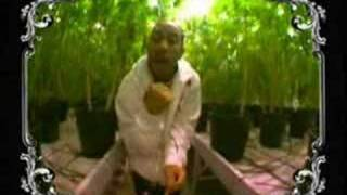 Ludacris - Blueberry yum yum