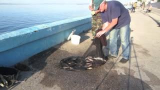 Рыбалка на саратовской набережной