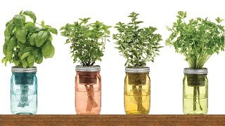 9 Herbs You Can Grow In Water
