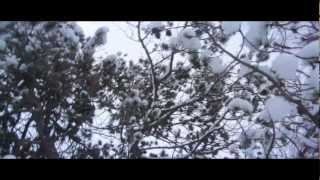 """""""Bitter Dancer"""" - Fleet Foxes Cover (Music Video)"""