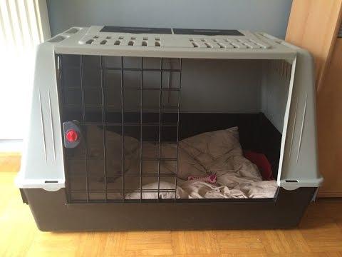 Hundebox -  Warum man seinen Welpen