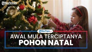 Sejarah Pohon Cemara yang Selalu Hadir di Setiap Perayaan Natal, Berawal dari Jerman