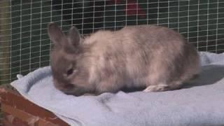 How To Arrange Rabbit Bedding