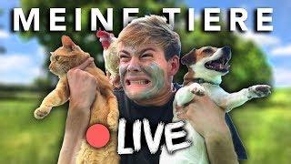 ICH STELLE MEINE TIERE VOR - LIVE | Joey's Jungle