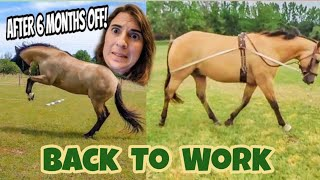 Bringing a horse back into work after time off ~ Equestrian How To