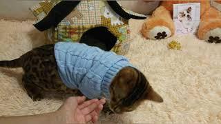 Кошка и еда.Что выберет Наоми что-бы покушать?/Разные животные/ 《Кошки》