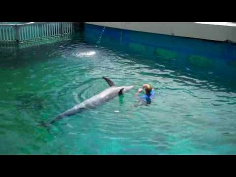 ~ Streaming Online Wholphin: Issue 10