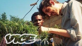 Swaziland: Gold Mine Of Marijuana (Trailer)