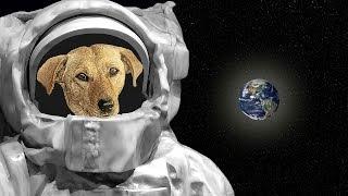 आखिर Laika के साथ क्या हुआ था    The Sad Story of Laika First Dog in Space