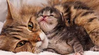 Mommy Cat Give Birth Three Baby