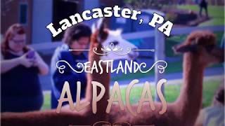 Eastland Alpacas -Mount Joy Pennsylvania