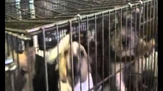 Video Bad Age - Obchod s utrpením