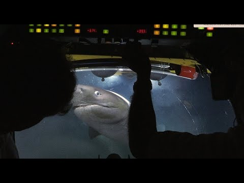 Hungry Sharks Attack a Submarine