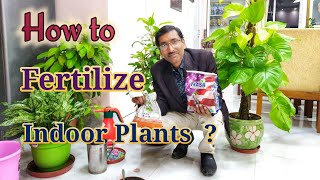 How to Fertilize your indoor Plants ?