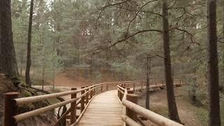 Koka taka Garciemā