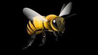 Подкормка пчел сахарным сиропом с апимаксом
