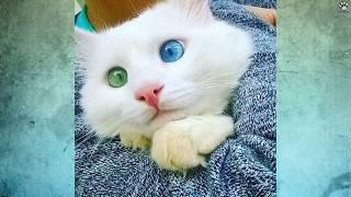 10 Najpiękniejszych kotów świata