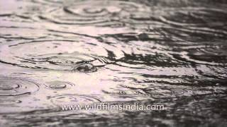 Drops from Heaven: Slow Motion HD Capture