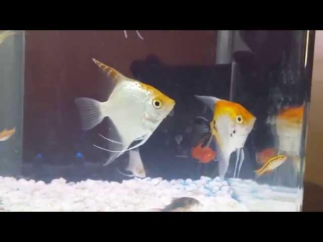 Tropical fish 4K Ultra HD Recording