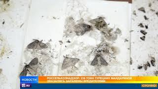 Россельхознадзор: 226 тонн турецких мандаринов оказались заражены вредителями