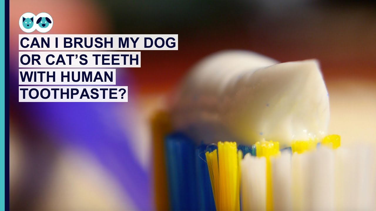 Can I Use Human Toothpaste on Dogs or Cats?