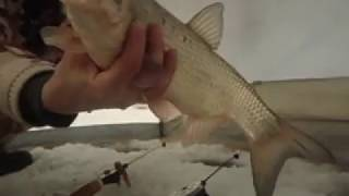 Ловля зимой на реке язя