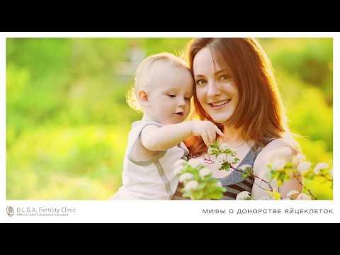 Мифы о донорстве яйцеклеток (ооцитов)