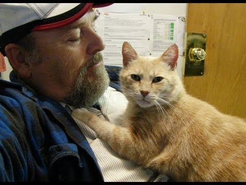 Taming a feral TOM CAT with patience and kindness