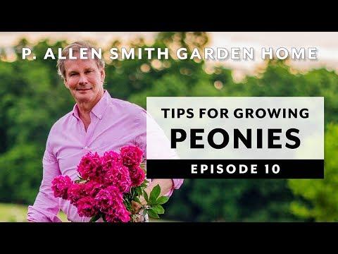 Peonies | Growing Tips & FAQ: Garden Home VLOG (2019)