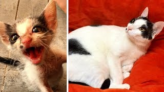 Rescuing a terrified abandoned Kitten - The transformation will amaze you! - Video Youtube