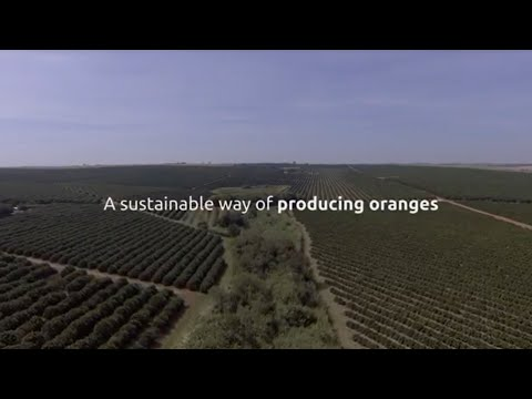 The sustainable way to produce oranges