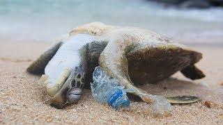 Thumbnail for POWERFUL VIDEO: Why We Need to Stop Plastic Pollution in Our Oceans FOR GOOD | Oceana