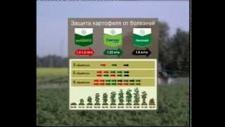 Система защиты картофеля от Байер