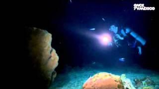 Nuestros Mares - Buceo Nocturno