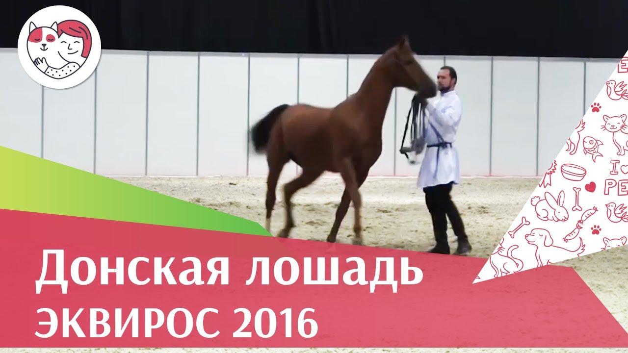 ЛОШАДИ Донская порода ЭКВИРОС 2016 на ilikepet