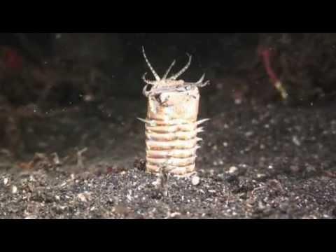 Mahawa ang sanggol worm sintomas