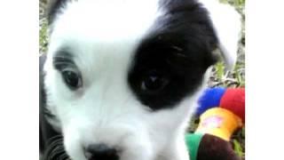 josh kelley baby blue eyes