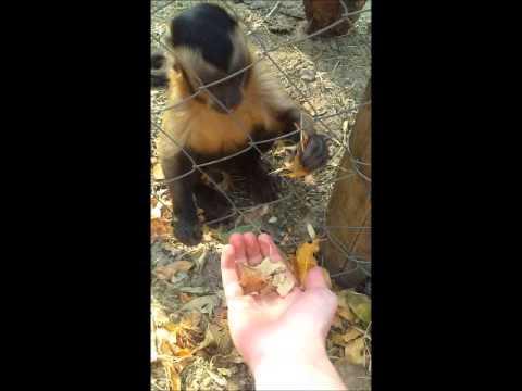 Прикольный мастер-класс от маленькой обезьянки