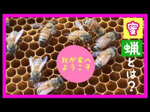 , title : '【初心者養蜂家】ミツロウとは?