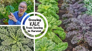 Growing Kale from Sowing to Harvest