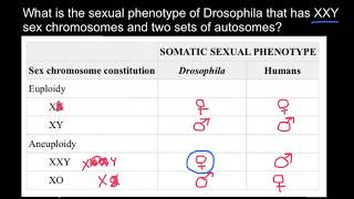 Sex Determination in Drosophila Melanogaster Explained