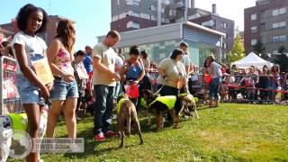 preview picture of video 'IV Concurso Canino Galgo Leku Galdakao'