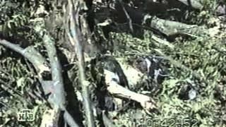 Первая чеченская война .Полная история от распада ссср до хосавьюрта
