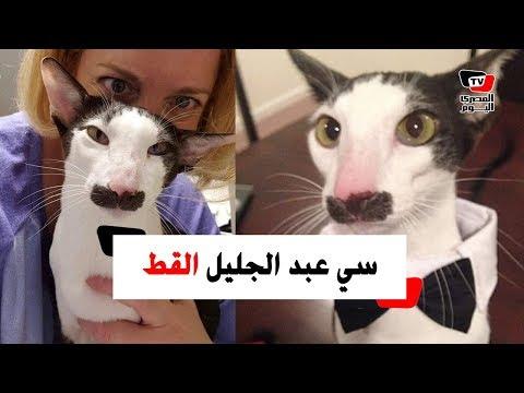 قط تونسي يخطف الأضواء على السوشيال ميديا