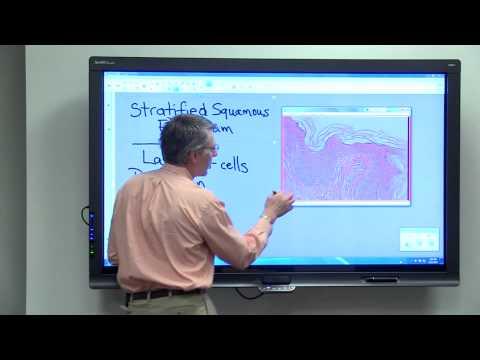 A helminthiasis laboratóriumi diagnosztikájának korszerű módszerei