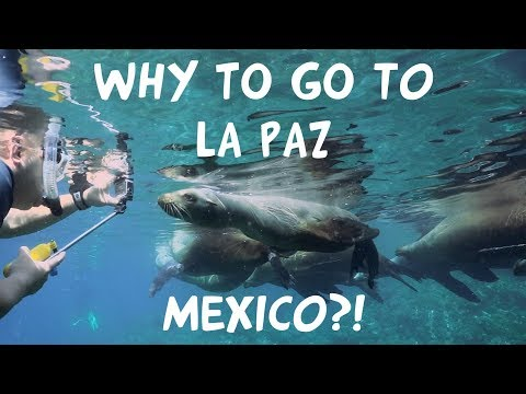 WHY to go to LA PAZ, Mexico?!?