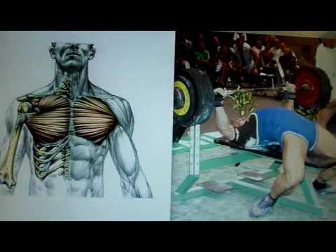 Comment correctement balancer le muscle