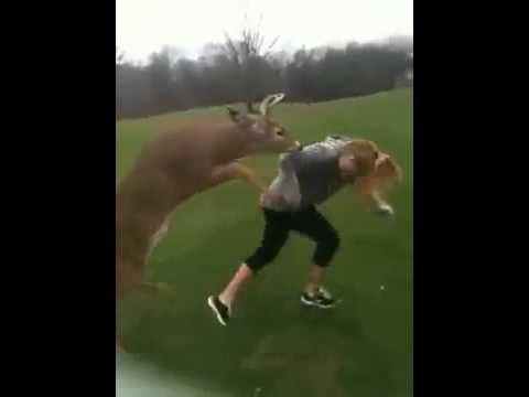 Deer Tries To Mate With Girl (Funny As Hell)