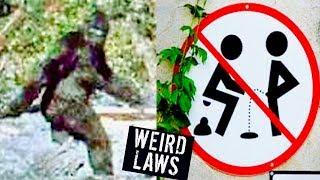 5 WEIRDEST LAWS IN THE WORLD